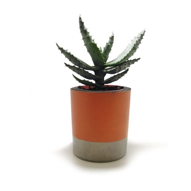tanso orange concrete planter